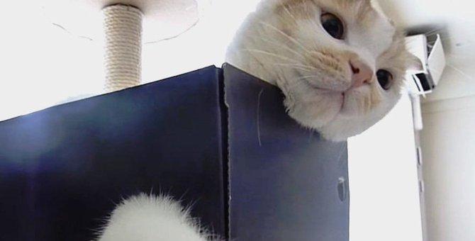 小さな穴からおもちゃを追う!器用に遊ぶ猫さん
