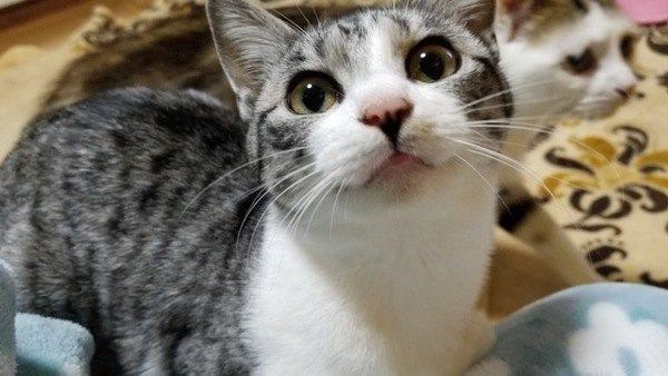 猫の鼻の色が変わるって本当?