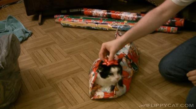 クリスマスプレゼント!?ラッピングされちゃう猫さん!