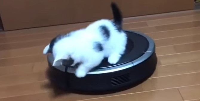 お掃除ロボットとたわむれる子猫がただただかわいい
