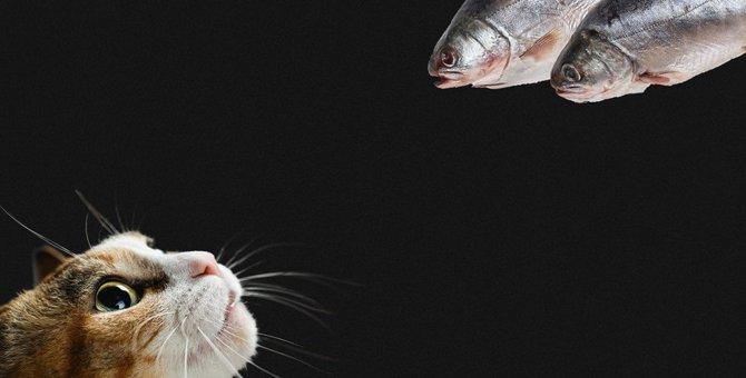猫に『生の食べ物』はNG?絶対与えちゃダメなもの3選!