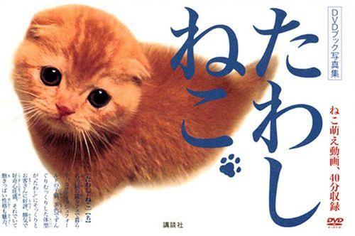 『たわしねこ』で有名なたわしちゃんってどんな猫?会える場所やその他の活動