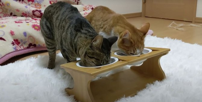 猫ちゃん達のために新しい食器セット♪どんな反応する?