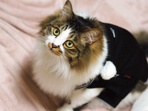 猫が飼い主に見せる『親愛のサイン』5つ