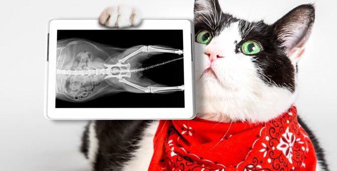 猫のレントゲン検査の費用や方法、体への影響