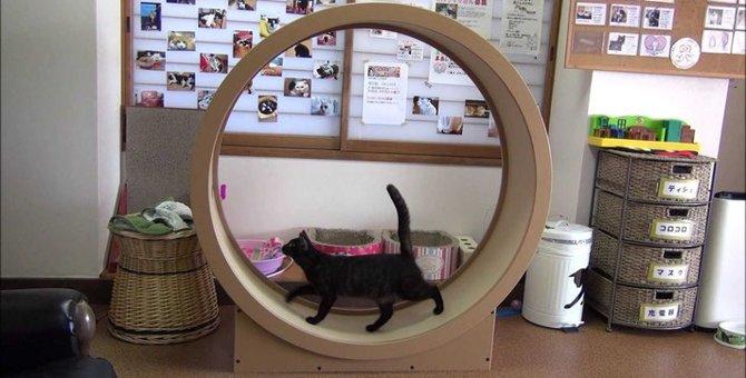猫用回し車のオススメ2種!その特徴や購入する方法