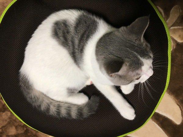 猫の模様ってどうやって決まるの?柄や色のルーツ