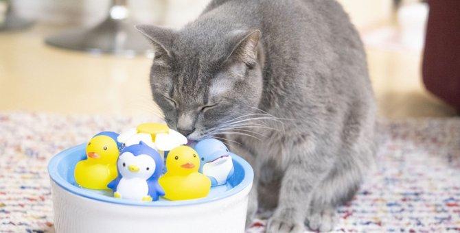 LAYLAの12猫占い【6/8〜6/14】のあなたと猫ちゃんの運勢