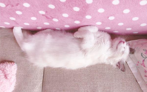 猫はなぜ寝てばかりなの?5つの理由
