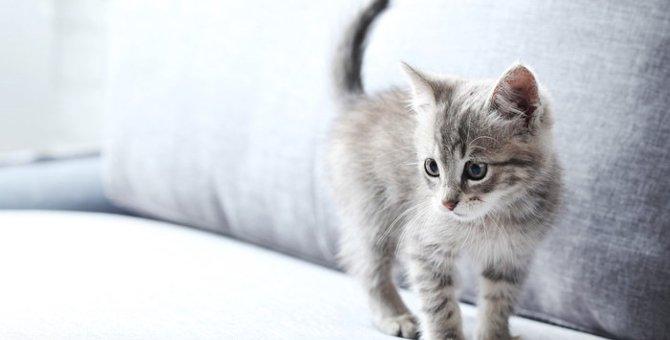 子猫をしつける方法と適した時期