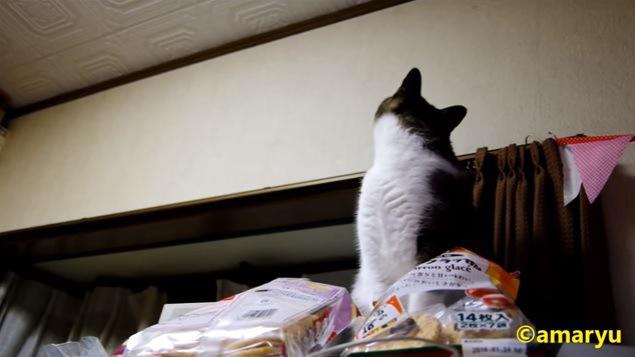 「ニャ、ニャんにもしてませんけど?」すっとぼける猫ちゃん☆