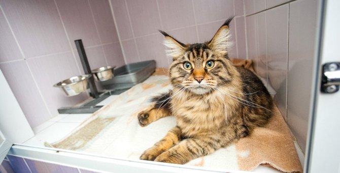 猫の『ペットホテル選び』で注意すべきこと4つ