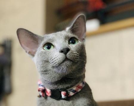 『猫好き』として知られている国3選