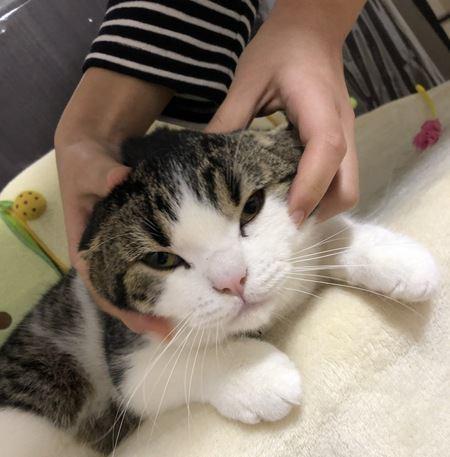 猫とスキンシップを取りながら健康管理!チェックするべき場所4つ