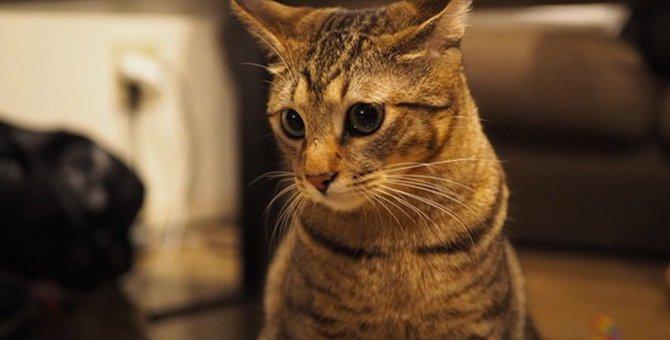 猫だって照れる!恥ずかしがっている猫の仕草3つ
