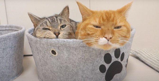 ベッドはふたつあるのにひとつのベッドに仲良く入る猫ちゃんが可愛すぎ♡