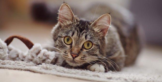 猫の黒目が持つ役割と機能