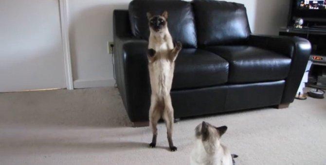 ピーッ!ピーッ!バックしまーす♪猫ちゃん、前に進むつもりが何故か後ろに