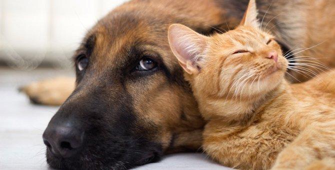 猫と犬はこんなに違う!7つの仕草と気持ちの違い