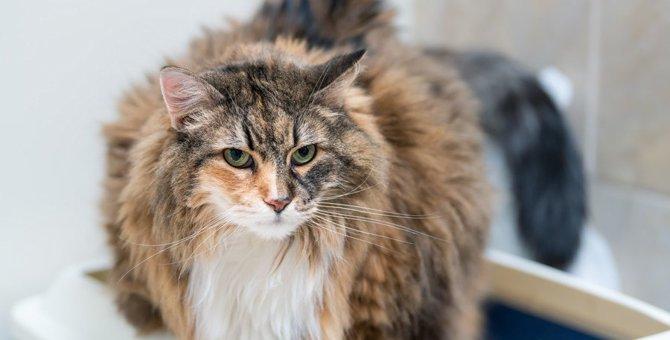 猫が『低い声』で鳴く時に訴えていること5つ