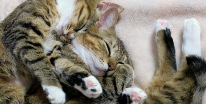 猫の睡眠と夢の内容について