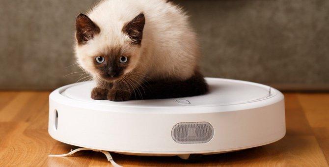 猫が『お掃除ロボット』に乗りたくなる4つの理由