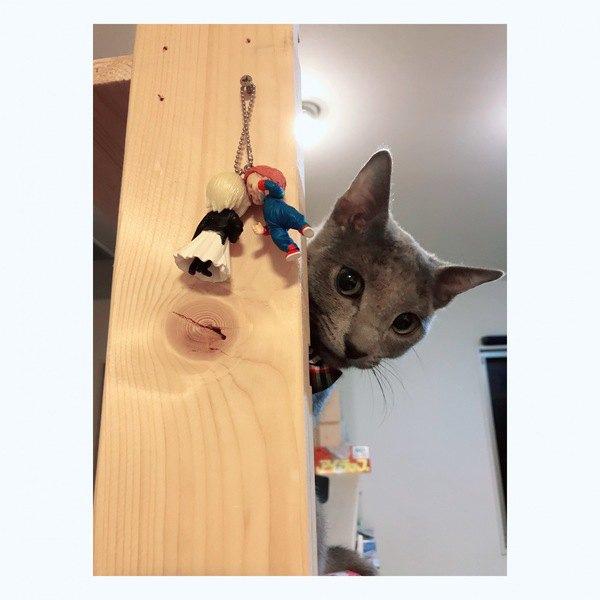 猫への「話しかけ」で大切なこと5つ