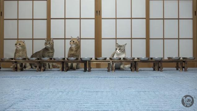 食事中に突然のアクシデント!それぞれの猫の反応は?
