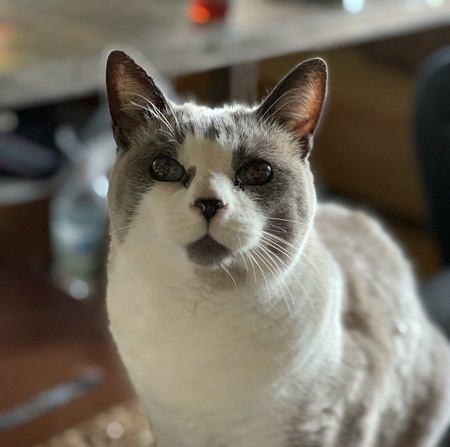 猫の寿命を左右する『3つのポイント』