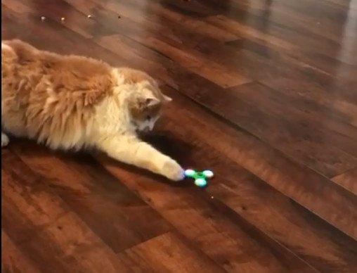 猫VSハンドスピナー!勝つのはどっち?