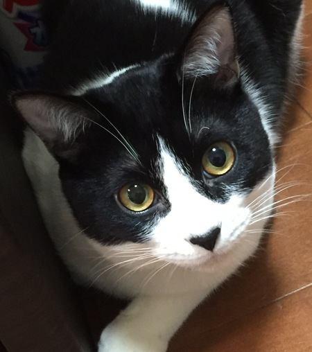 猫の目の色は何種類くらいあるの?