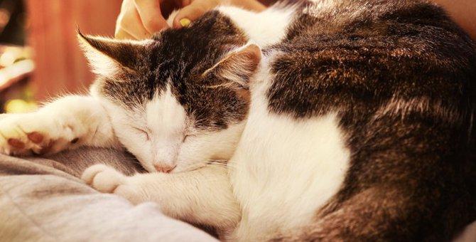 16歳の猫との過ごし方!生活の注意点から痴呆の症状まで