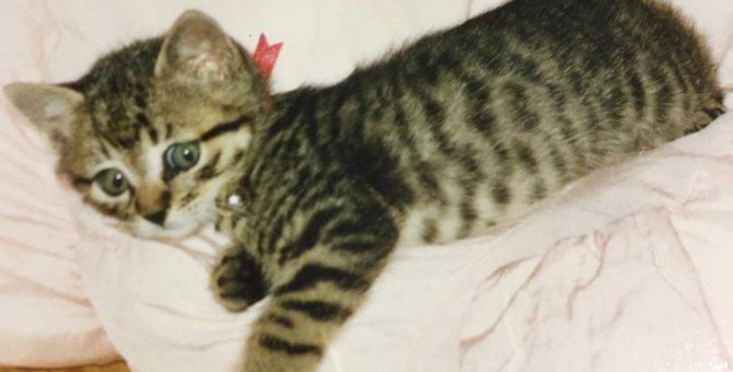 一緒に過ごした24年間は家族の宝物。天国へ旅立った愛猫「ハナ」が教えてくれたこと