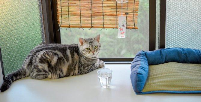 アイスクリームやかき氷、猫に食べさせても大丈夫?
