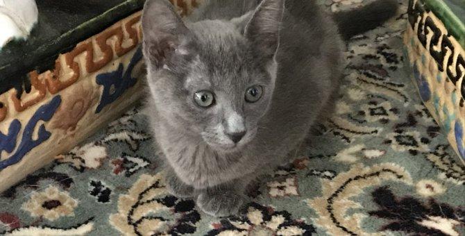親友を亡くした愛猫のために『オトモダチ計画』!砂漠のセンターにお宝発見