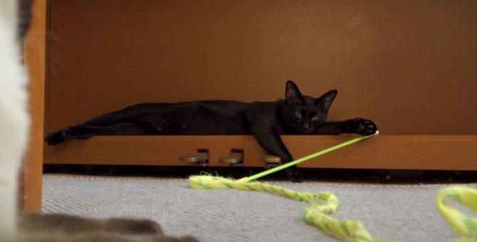 ぐでーん。やる気が出なくて1ミリも動きたくない黒猫ちゃん