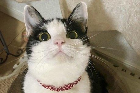 猫に『好かれる話し方』の特徴3つ