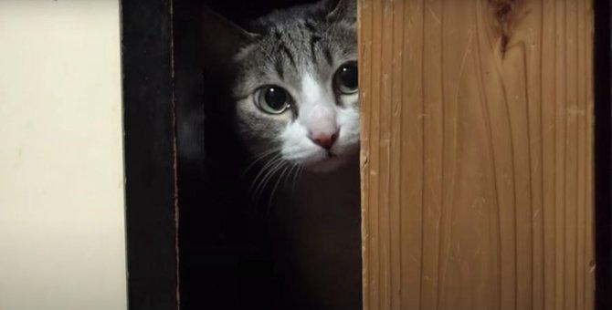 なぜ?入れたのに出られなくなった猫ちゃん!?