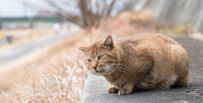 困っている野良猫を見かけたら…あなたにもできる4つのケース別対応方法