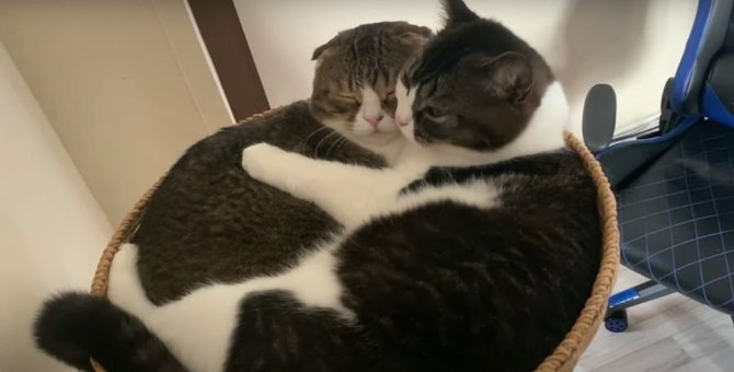 仲良しすぎる♡イチャイチャする親子猫がかわいい♡