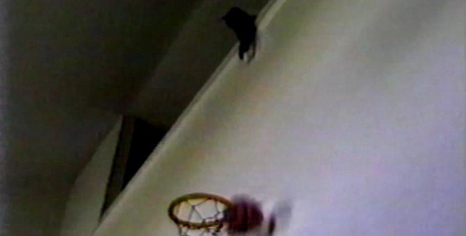 シュートは僕にまかせろニャ!バスケのゴールを決めまくる猫ちゃん