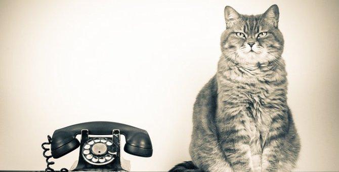 【緊急時】愛猫の様子がおかしい・・・困った時はここに相談!