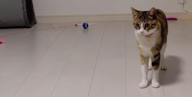 テンションMAXな姉猫を見て戸惑いが隠せない妹猫
