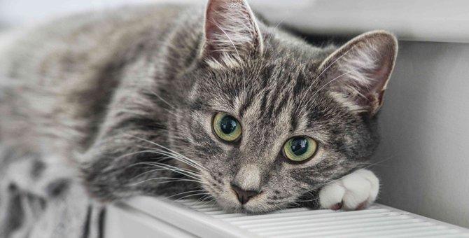 猫の死を招く『紫陽花』の危険性とは?食べた時に表れる2つの症状や対処法を解説!