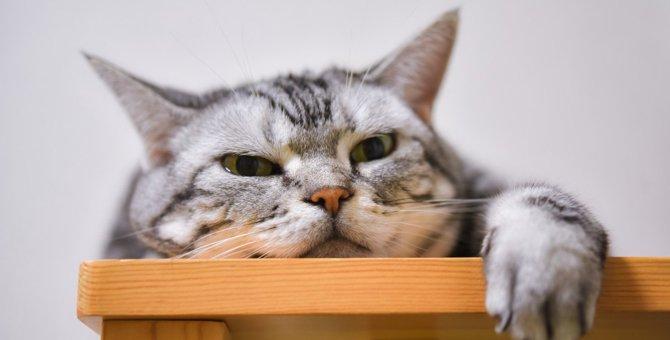 猫が『退屈しのぎ』をしている時にする行動5選