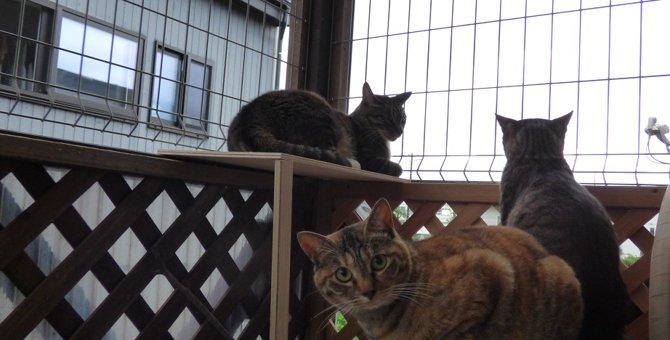 猫たちがベランダで遊べるように!脱走防止策を手作りしてみました!