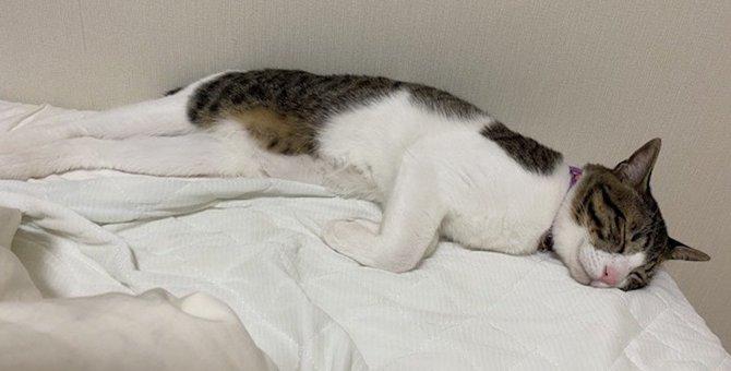 夏の夜は猫のためにエアコンをつけておくべき?適切な室内温度はいくつ?