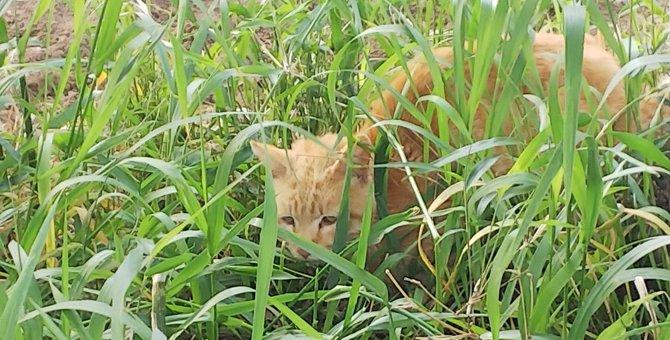 衰弱し切った野良猫を助けて…!Twitterの拡散で救われた命