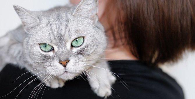 猫が『しつこい!』と思っている時にする行動5つ