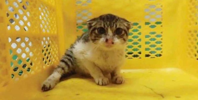 保健所で怯え立てない子猫を救出…温かい応援を受け奇跡が!